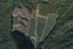 白川町の茶畑