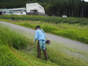 夏の茶畑管理作業