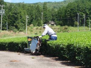 鱒渕茶園でとれるますぶち園の白川茶